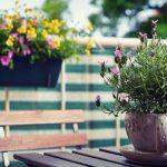 Tips para un balcón de plantas aromáticas